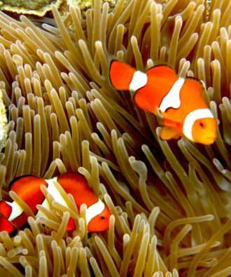 Solomon Islands snorkelling experience